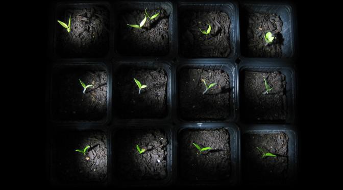 Weltenbau mit System: Wie man seiner Welt Herr wird